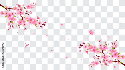 Wall mural Spring Sakura branch with falling petals Vector illustration. Pink Cherry blossom isolated on fake transparent background.