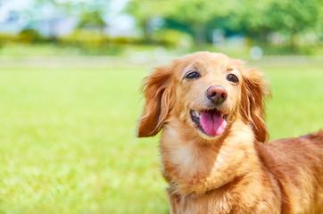 Spoed Fotobehang Hond 笑顔の犬