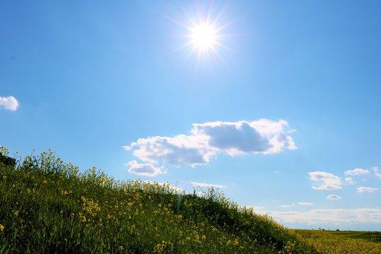 春の渡良瀬 菜の花 空 太陽 栃木県