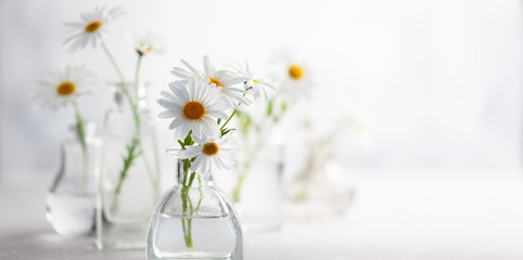 Photo sur Toile Marguerites Beautiful daisy flowers in glass vases on light background. Floral composition in home interior.