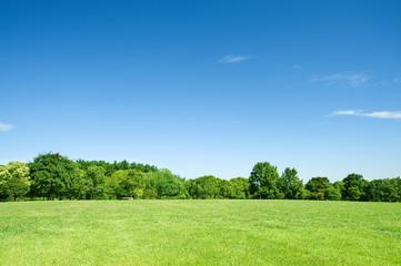 Keuken foto achterwand Blauwe hemel 青空と草原と新緑の樹