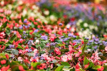 Ein buntes Blütenmeer der Freude und Inspiration
