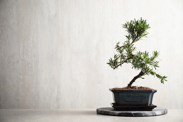 Foto op Plexiglas Bonsai Japanese bonsai plant on light stone table, space for text. Creating zen atmosphere at home