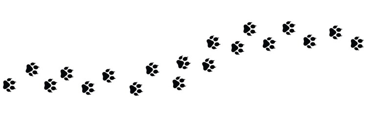 Paw vector foot trail print on white background.foot trail cat or Dog, path pattern animal tracks, isolated on white background