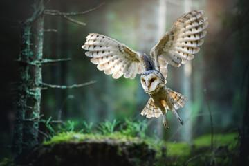 Foto auf Leinwand Eulen cartoon Barn owl in flight before attack in deep magic forest, Tyto alba spead wings.