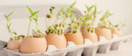 Photo sur Plexiglas Magasin alimentation seedling plants in eggshells, eco gardening, montessori, education, reuse ,Eco green sustainable living concept, plastic free, zero waste concept
