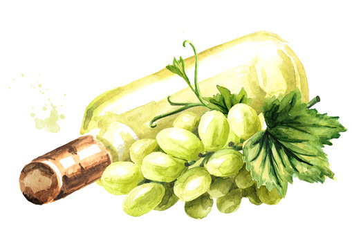 Bottle of White wine with vine leaves and grape berries. Hand drawn watercolor illustration isolated on white background