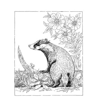 Black and white drawing badger on log
