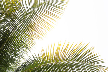 Fototapeten Palms tropical palm leaf background, coconut palm trees perspective view