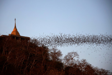 Bats fly out of the cave at Wat Khao Chong Phran in Ratchaburi
