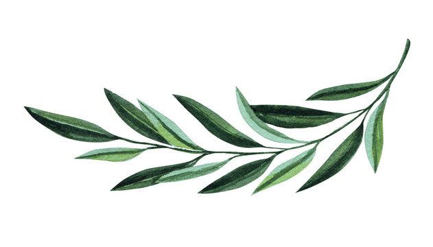 Watercolor illustration with olive branch. Floral illustration for wedding stationary, greetings, wallpapers, fashion and invitations.