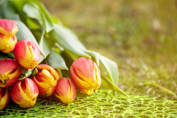 Foto auf Leinwand Tulpen Spring Background with Flowers on green grass
