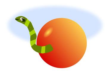 Cute Worm in an apple.