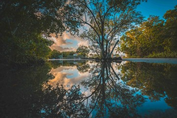 aquatic lake river landscape tree nature sky clouds reflection forest florida green summer ponds spring outdoor color beautiful calm