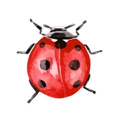 Fototapeta Watercolor illustration of ladybug in red ink with black spots obraz