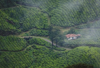 Foto op Canvas Khaki Munnar is a town in the Western Ghats mountain range in India's Kerala state.