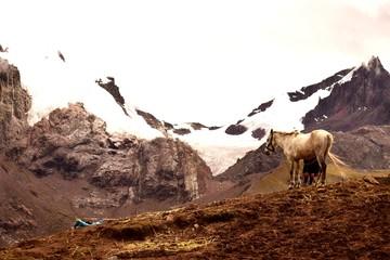Fotorollo Braun herd of antelopes feeding in the desert