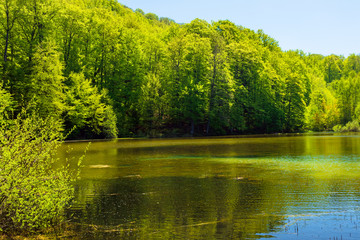 landscape by the mountain lake among coniferous forest. wonderful nature scenery in springtime at high noon.