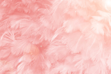 Beautiful soft pink color trends feather pattern texture background with orange light flare