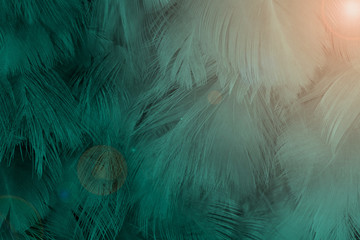 Wall Mural - Beautiful dark green viridian vintage color trends feather texture background with flares orange light