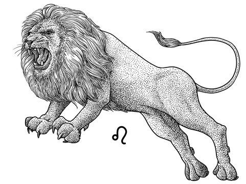 Leo zodiac symbol illustration, drawing, engraving, ink, line art, vector