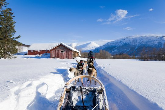 Dog sledding, husky tours in Noway. Dog sledding trip and travel at high speed across the Norwegian wilderness.