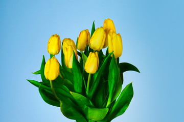 Canvas Prints Tulip Tulpen