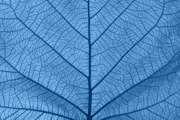 Obraz Extreme close up texture of blue toned leaf veins - fototapety do salonu