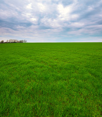 Fototapete - Spring landscape of green field with winter crops and sky with clouds