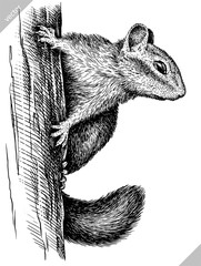 black and white engrave isolated chipmunk vector illustration