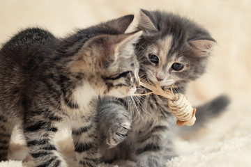 Two cute kittens playing a toy on a cream fluffy fur blanket