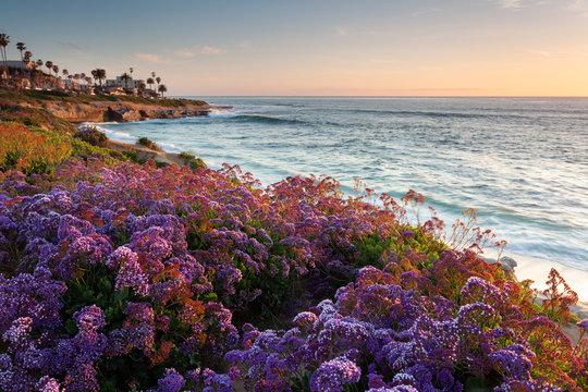 Sunset during spring bloom at La Jolla Beach, San Diego, California.