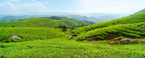 Panoramic view of the tea plantation in the hills of Munnar, some of the most elevated tea plantations in the world, Kerala, India Fototapete