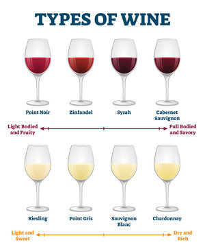 Types of wine vector illustration. Labeled red and white drink explanation.