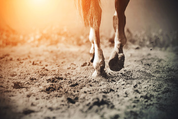 Foto op Canvas Paarden The graceful legs of a galloping horse, its hooves clattering on the sand, raising dust in the sunlight.