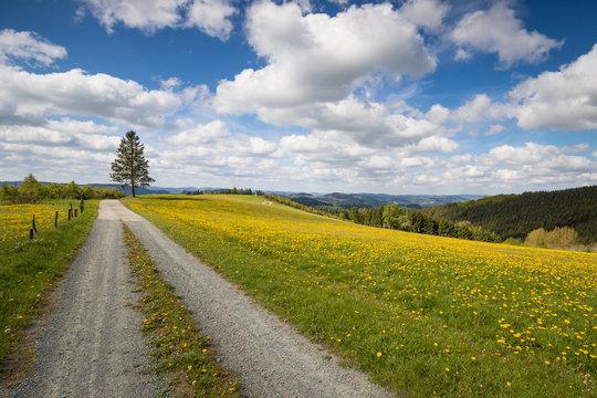 Frühling im Sauerland