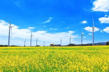 Fotorollo Gelb 유채꽃과 청정에너지를 생산하는 풍력발전기의 아름다운 조화이다.