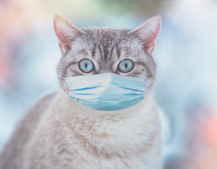 The cat in medical face mask (respirator) outdoors. Medical concept