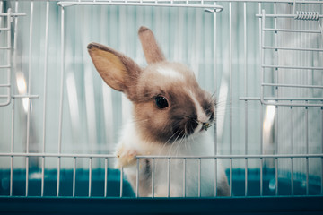 home rabbit in a cage