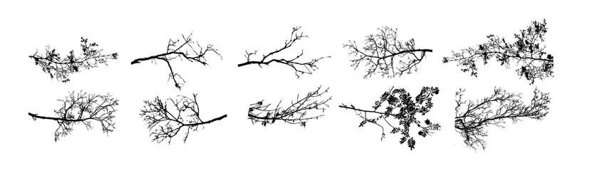 A set of tree sprigs. Vector illustration