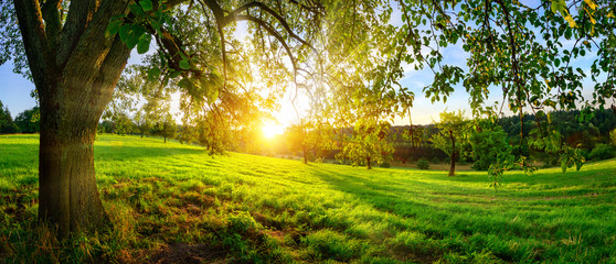Photo sur Plexiglas Morning Glory Sunset view from under a tree on a green meadow with hills on the horizon