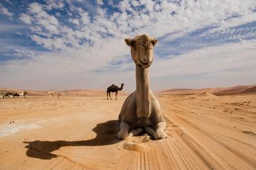 Poster Kameel Desert shapes and camels