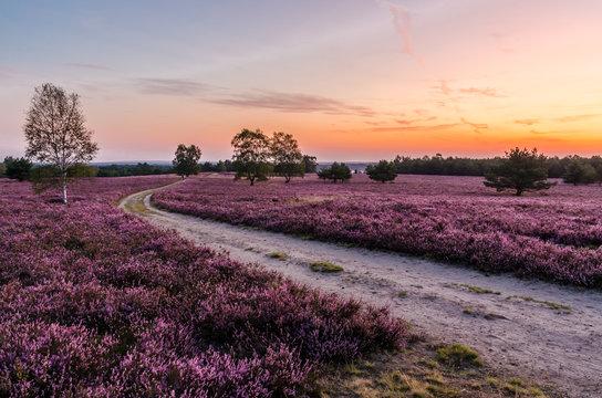 Morgendämmerung in der Lüneburger Heide