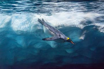 Tuinposter Vissen Penguin diving under ice, underwater photography .