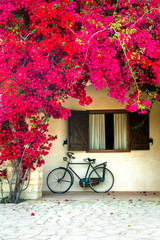 Charming street (house) decoration with old bike and blooming red flowers