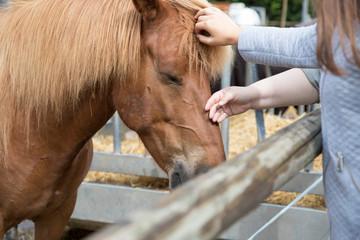 Kinder streicheln Pferd