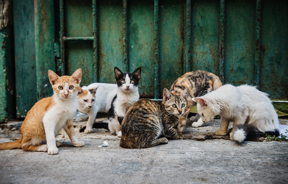 Stray kittens on the streets of Havana