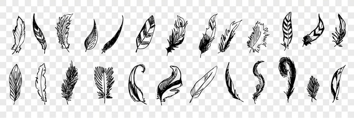 Hand drawn bird feathers doodle set collecton Fotomurales