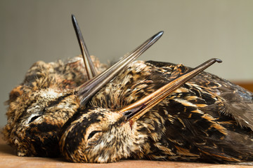 two snipe and woodcock are on the kitchen table
