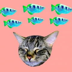 Contemporary art collage.  Kitty dreams about fish